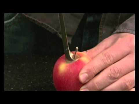 Приспособление для удаления сердцевины яблок своими руками 42