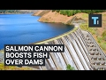Salmon Cannon gives fish a boost over dams