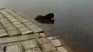 彩湖公園でちょこっと水遊び.