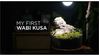 My first Wabi Kusa: a step by step tutorial
