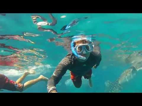 Swimming w/ the whale sharks (Butanding) - Oslob Cebu, Philp