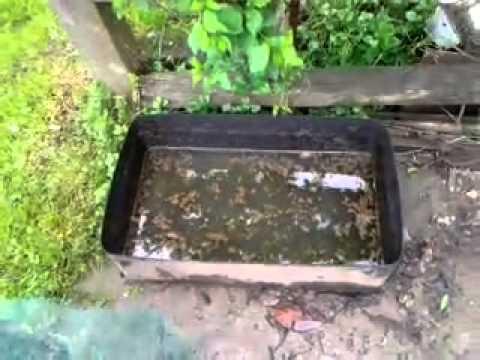 Come eliminare le formiche in casa: i migliori ... - eTerra