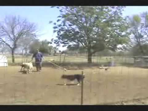 Download Keeper's 1st Time Sheep Herding