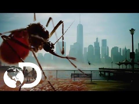 Estreno Mundial: Mosquito muy pronto en Discovery Channel