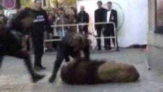 untamed and uncut lion attacks owner