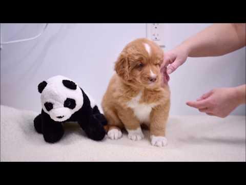 Deseree's Puppies Present: Mr. White Week 7