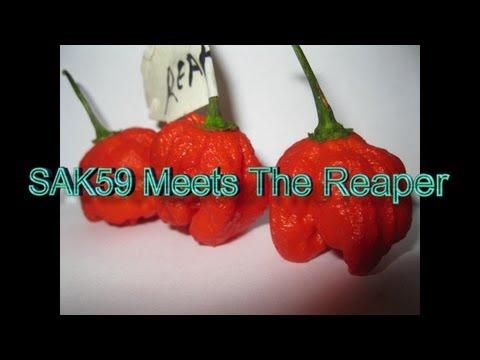 SAK59 Meets The Reaper