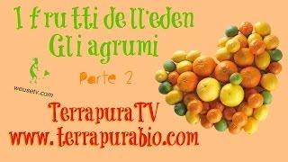 I frutti dell Eden - Gli agrumi (parte 2)