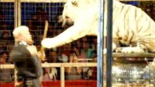 "Circus Life...""Captive"" Entertainment"