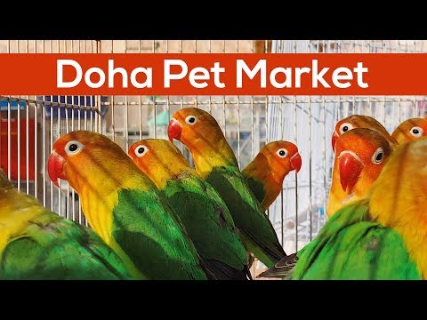 21 Hours in Doha Qatar - THE PET MARKET - Vlog