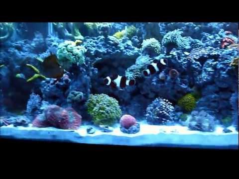 d1989df2ac 65 Gallon Reef Tank Saltwater Aquarium - YouTube