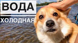 Снова на пляж с собакой🐶 Венские вафли/ Влог с корги ТАФФИ