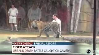 San Diego Zoo Tiger Attack | www.pixshark.com - Images ...