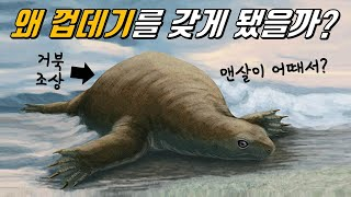 거북이 껍데기를 갖게 된 진짜 이유!│등딱지VS배딱지,…