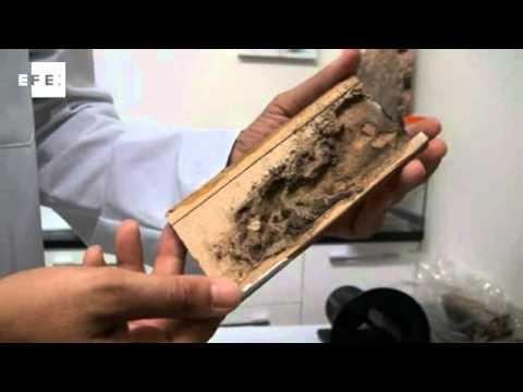 Fumigacion contra termita 2 inyeccion en perforaciones - Acabar con las termitas ...