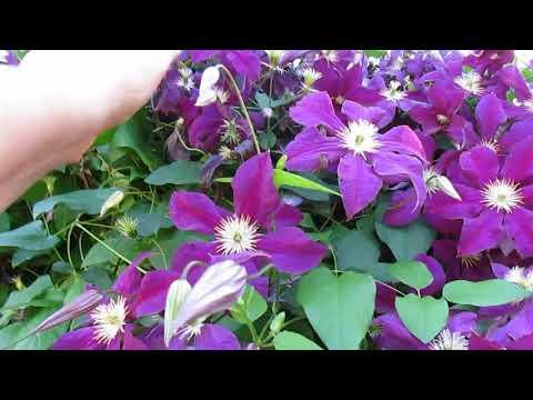 Мой сад огород в конце лета  О сороках хулиганках!!!