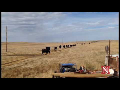 Streaming Science: Research to Help Nebraska's Ranchers