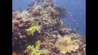 Райские Мальдивские острова. Фильм