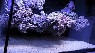 The floating reef aquascape tutorial by coral gardens (EN)