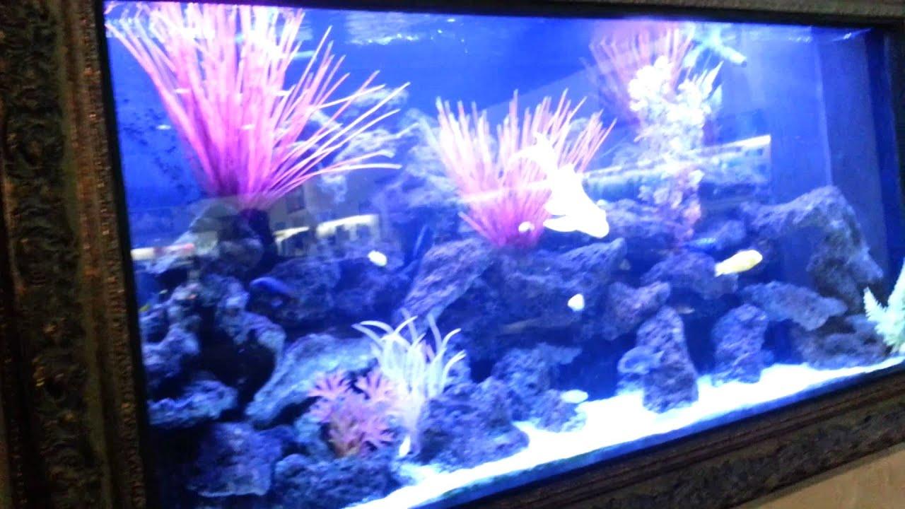 Freshwater aquarium fish dallas - Dallas North Aquarium