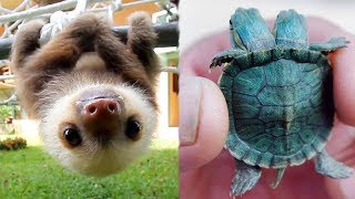 Cutest Baby Animals Videos Compilation Funny Moment of the Animals - Cutest Animals #1