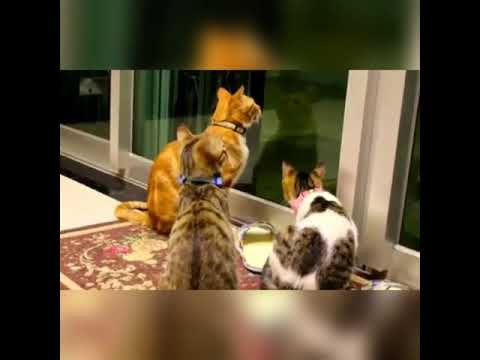 Funny Cats and Kittens Meowing Compilation  HAHAHAHA