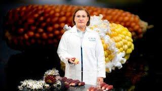 FES Cuautitlán por la preservación del maíz - UNAM Global thumbnail