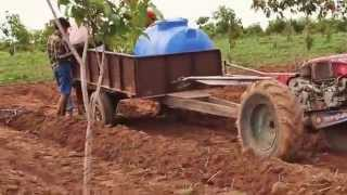 Spraying Mango Farm
