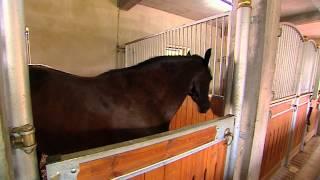 Dotacje dla wsi - Tworzenie i rozwój mikroprzedsiębiorstw - stadnina koni