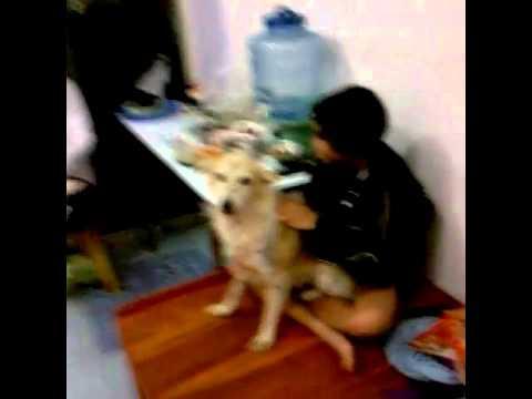 หลานสาวเล่นกับหมา