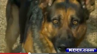Pit Bull attacks German Shepherd Police dog on patrol