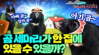 동요처럼 실제로 곰은 무리 생활을 할까?  [#시크릿주…