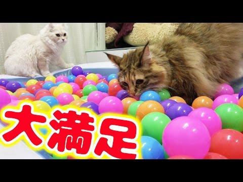 猫とカラーボール風呂で遊んでみた!