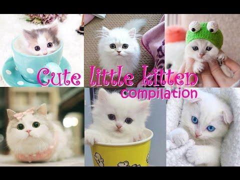 Cute little kitten - 😻 funniest cute kittens 💖 videos compilation 2017 #petcarol #torodepalpite