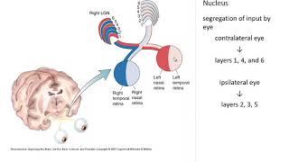 Propilén-glikol látás. Omphalocele gyanúja