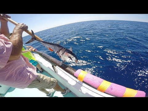 Deep Sea Party Boat Fishing Florida, ''GRAPHIC FISH ATTACK!?