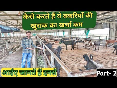 कैसे करें अपनी बकरीयों की खुराक का खर्चा कम |  Hydroponic Technology | P-2 @SR Commercial Goat Farm