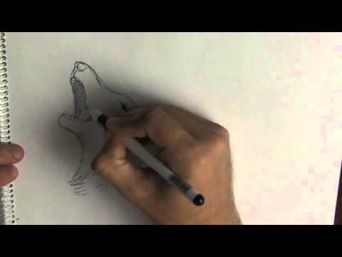 Ускоренный рисунок волка. Hand drawn howling wolf