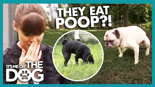 My Dog Eats Poop! [YOUTUBE EXCLUSIVE] | It's Me or the Dog