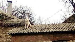 Собака на крыше приколы
