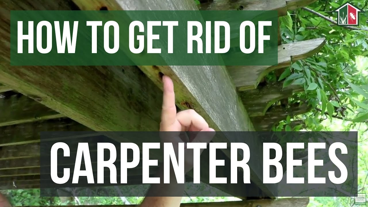 How to Get Rid of Carpenter Bees (3 Easy Steps)