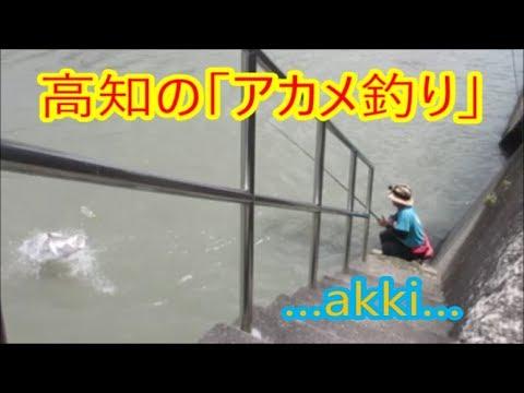 「アカメ釣り30」で【巨大魚とのファイト】大アカメとのファイト動画