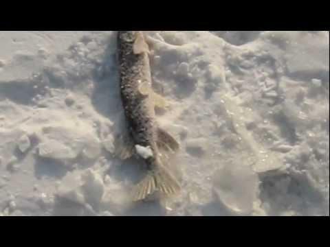 рыбалка на ханке на щуку