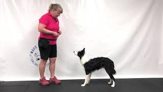 Trick Dog Training - Catch a Treat