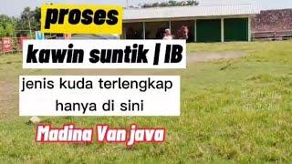 Wajib Di Tonton 👉kawin Suntik Kuda /IB & Jenis Kuda Terlengkap Hanya Di Sini ...