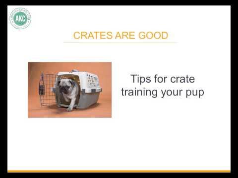 Housebreak puppy fast.................Peter Caine dog training, Brooklyn NYC