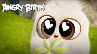 Angry Birds | Valentine's Day Favorites!