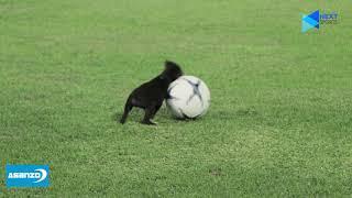 Chú cún đáng yêu tiếp tục gây sốt trên sân tập của đội tuyển Việt Nam