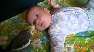Смешные животные / Нянька  попугай