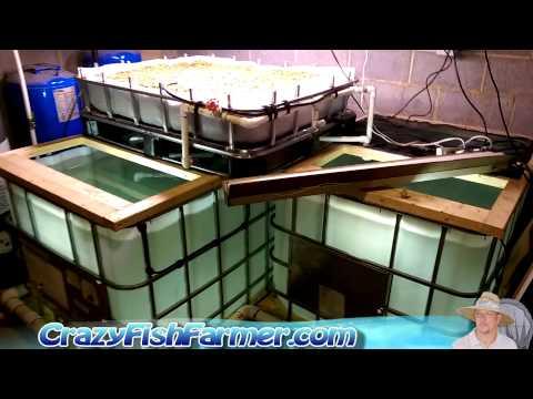 Indoors Small Scale Tilapia Aquaculture Farm Part 2